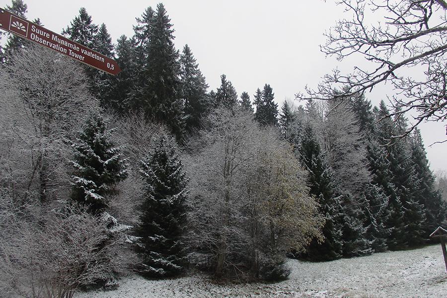 okraszona śniegiem Estonia widok z parkingu pod najwyższym szczytem Estonii