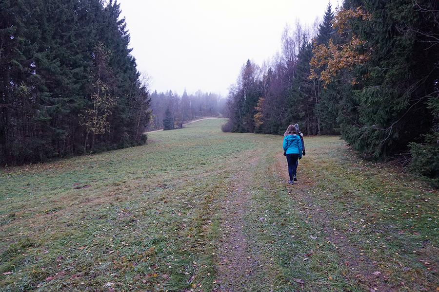 droga przez las na szczyt