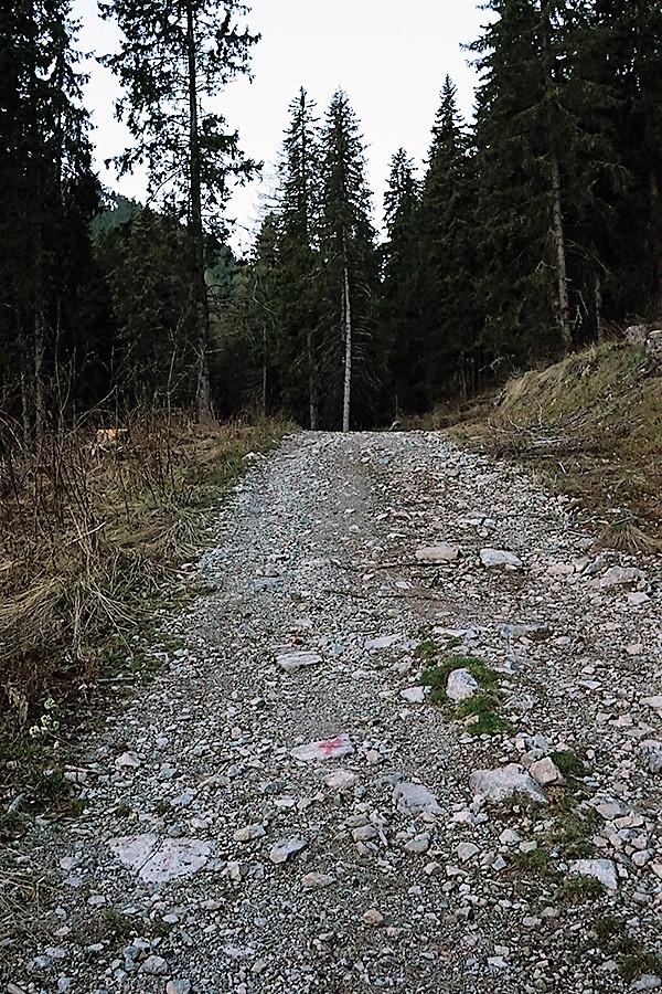 szeroka, ubita droga przez las. Na drodze znajdują się czerwone krzyże informujące o szlaku.