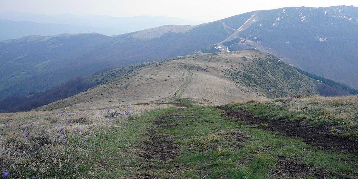 szeroki pieszo - rowerowy szlak w stronę Babin Zub, miej więcej na środku kadru widać sylwetki ludzi (skala)