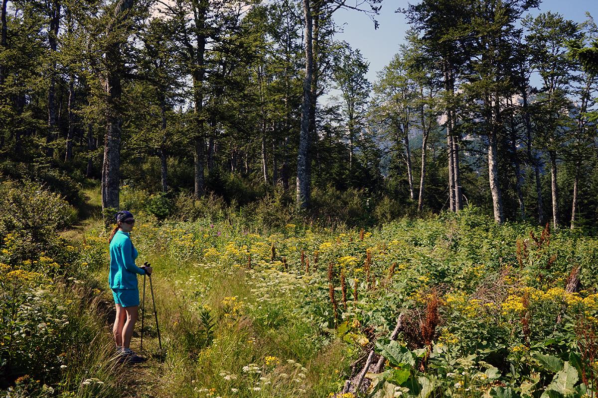 pierwsze 45 minut przejścia przez las, za drzewami wyłania się nasz cel