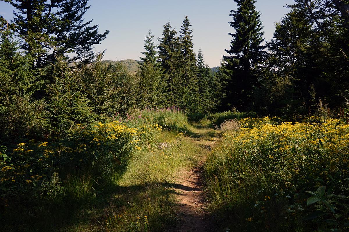 pierwsze 45 minut przejścia przez las