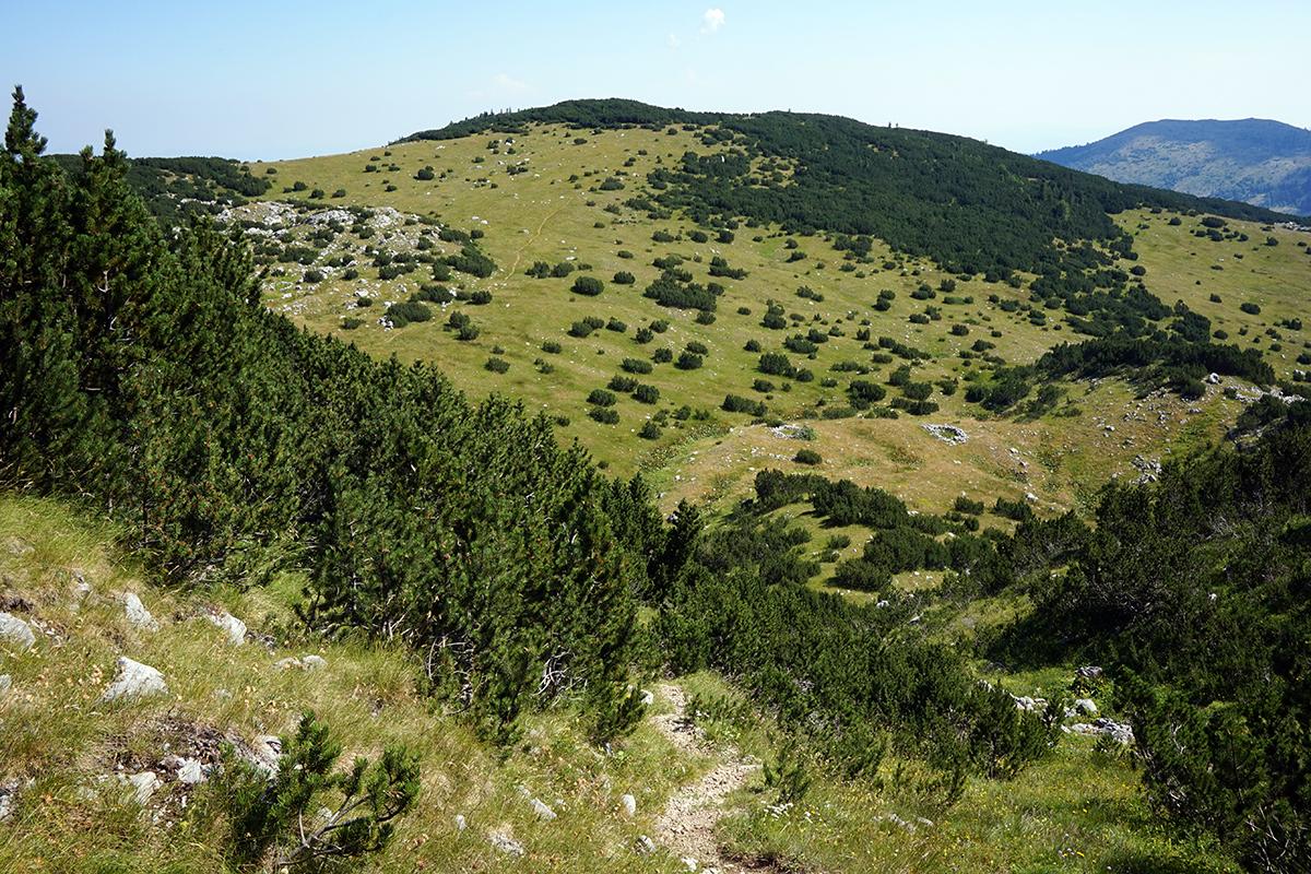 widok na polanę od strony góry, widoczna ścieżka szlakowa